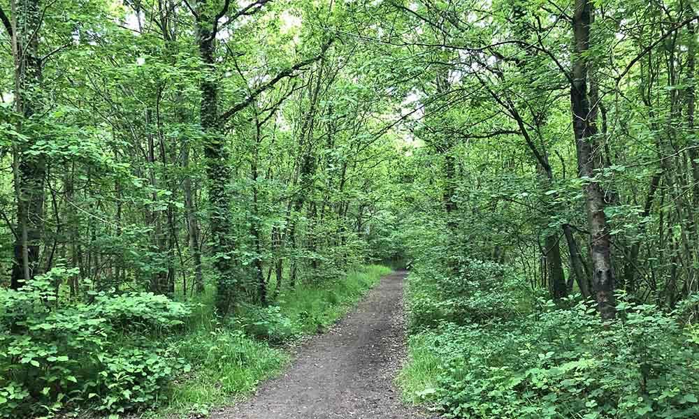 un sentier très verdoyant