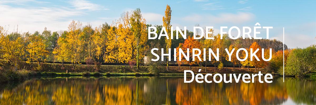 bain-foret-shinrin-yoku-sylvotherapie-decouverte-automne-2