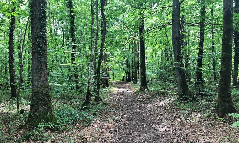 sentier-foret-grimbosq-flague-ruisseau-3