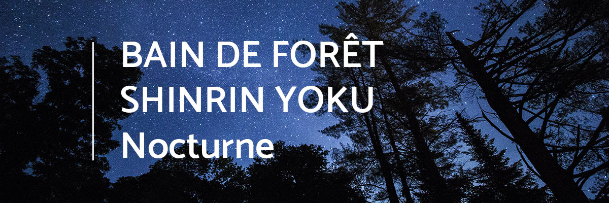 bain-foret-shinrin-yoku-sylvotherapie-nuit