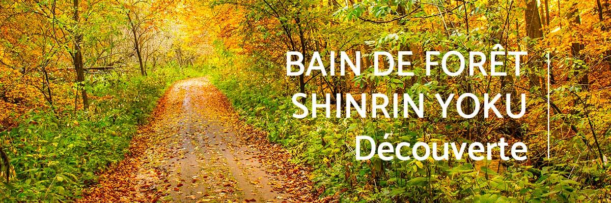 bain-foret-shinrin-yoku-sylvotherapie-decouverte-automne