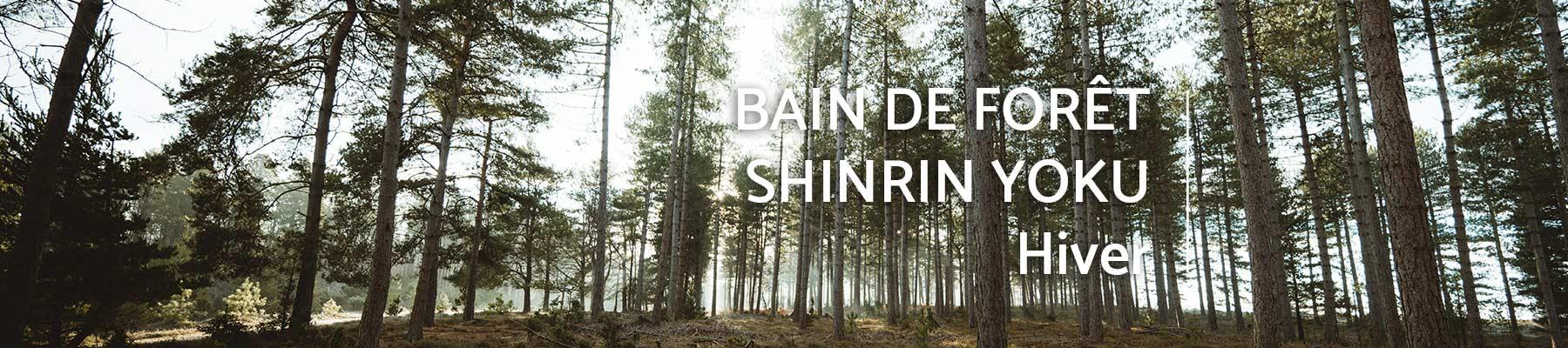 bain-foret-shinrin-yoku-sylvotherapie-caen-calvados-guide-certifie-hiver