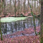 sentier-shinrin-toku-bain-de-foret-sylvotherapie-normandie-calvados-feuguerolles-bully-anne-lise-guide-mare